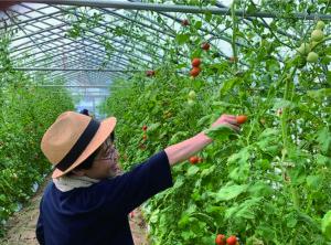 あわら市観光協会による新しい観光プログラム『夏野菜収穫ピクニック』